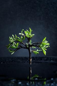 Arbre solitaire avec des feuilles vertes après la pluie