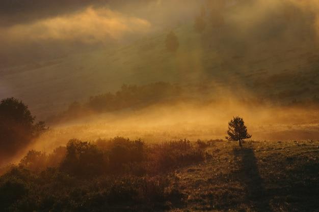 Un arbre solitaire sur les montagnes vallonnées. brume matinale sur l'altaï. charmant