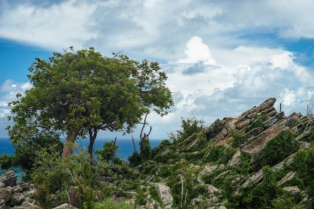 Arbre solitaire poussant au sommet du rocher.