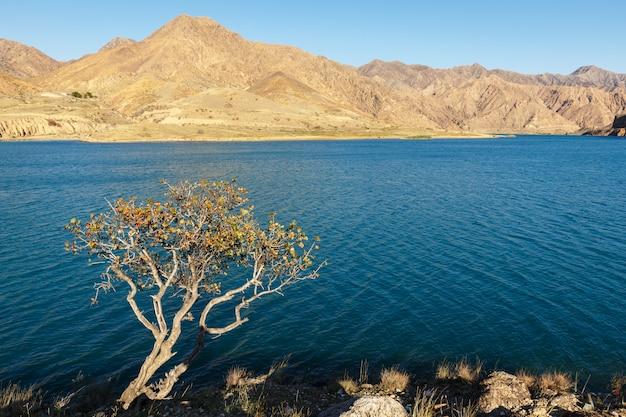 Arbre solitaire sur la rive de la rivière naryn dans les montagnes, kirghizistan