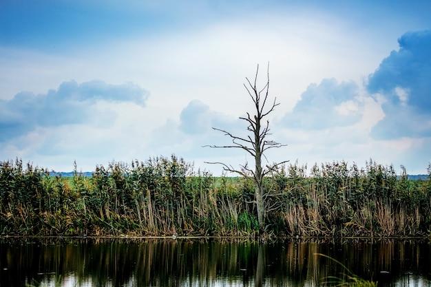 Arbre solitaire sur la rive de la rivière par temps nuageux