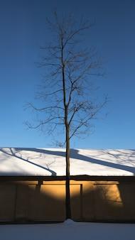 Arbre solitaire sans feuilles près du mur jaune du bâtiment au coucher du soleil