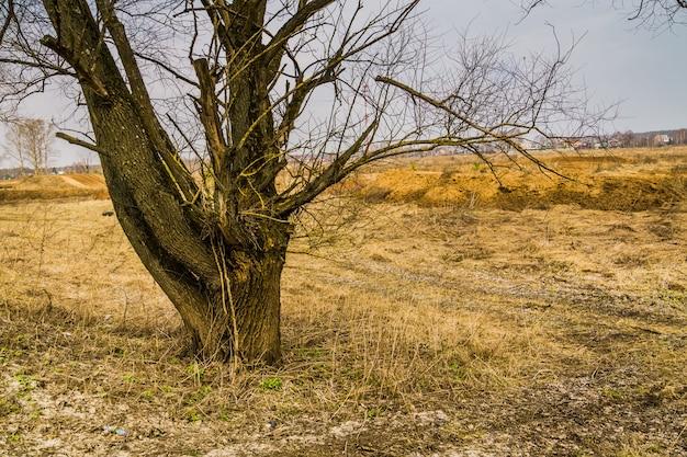 Arbre solitaire sans feuilles