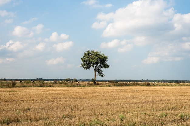 Un arbre solitaire se dresse au milieu d'un champ