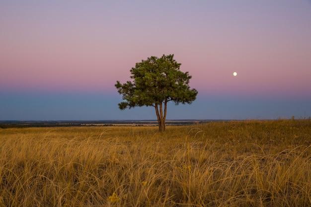 Arbre solitaire sur le terrain au coucher du soleil