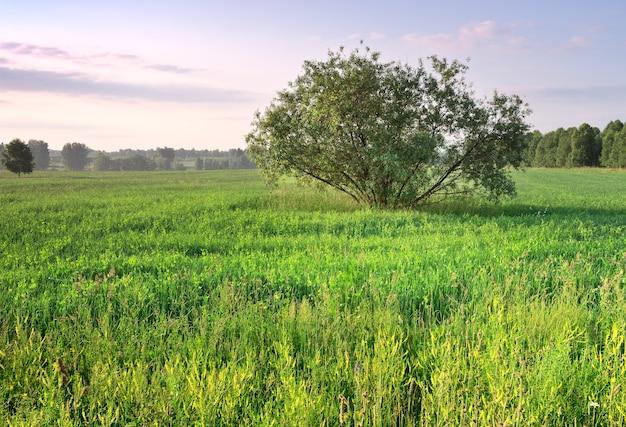 Un arbre tentaculaire au milieu de l'herbe verte et des fleurs sauvages en été