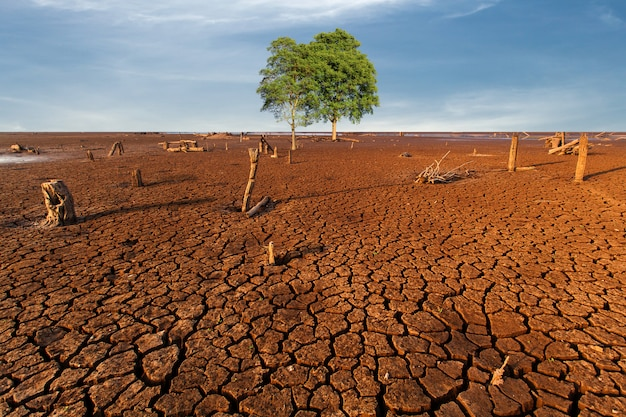 Arbre terre sèche fissurée sans eau.résumé.