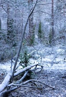 Arbre tombé gelé dans la forêt
