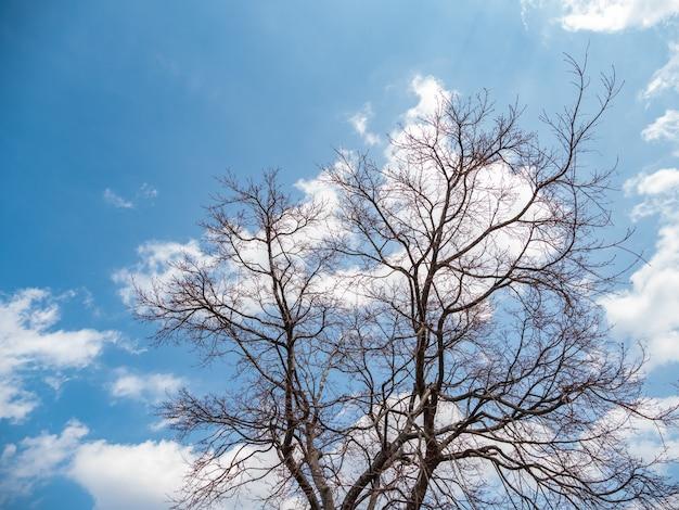 L'arbre en toute saison