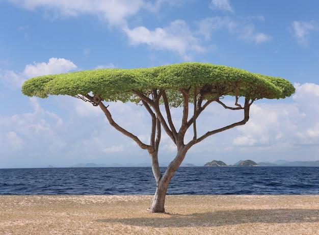 Arbre tropical du tamarinier de manille sur la plage et avoir la mer et le ciel en arrière-plan.