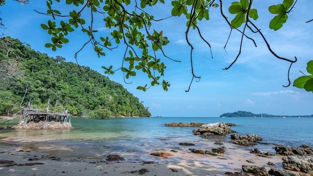 Arbre tropical sur la plage de la mer