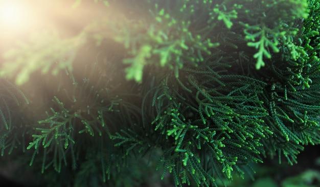 Arbre vert, beau et rafraîchissant de la nature.