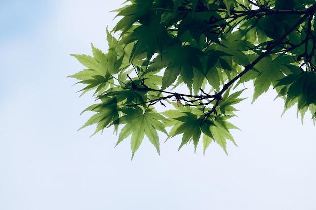 Arbre vert feuilles dans la nature, branches et feuilles