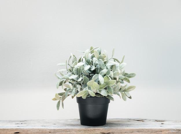 Arbre vert plante tropicale botanique en pot noir sur plancher de bois grunge et mur blanc de ciment