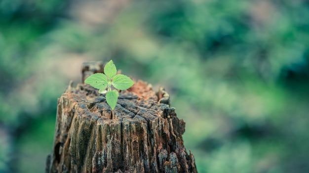 Arbre vert en pleine croissance