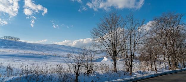 Arbre avec vue d'hiver