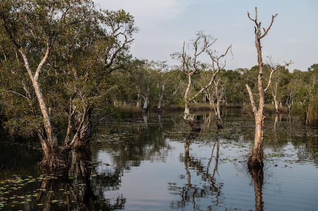Arbres (arbres à thé paperbark) sur la forêt de marais tourbeux
