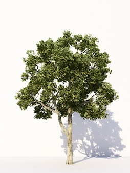 Arbres sur des arbres tropicaux blancs utilisés pour la publicité de conception et le rendu 3d de l'architecture