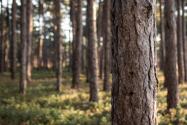 Arbres et arrière-plans de la forêt