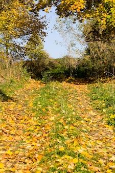 Arbres au début de l'automne