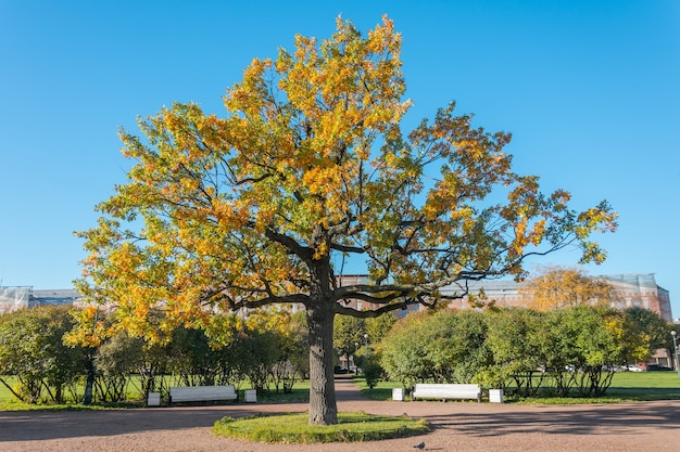 Arbres d'automne au feuillage jauni dans le parc ensoleillé d'octobre.