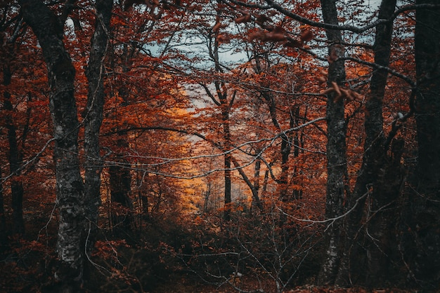 Arbres d'automne dans les bois
