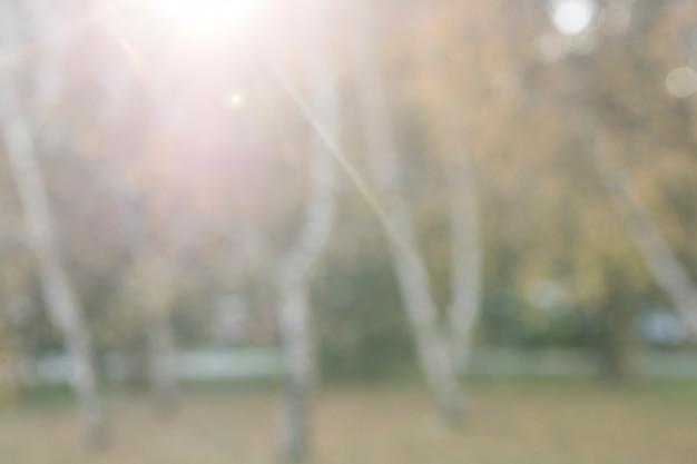 Arbres de l'automne défocalisé dans le parc au lever du soleil
