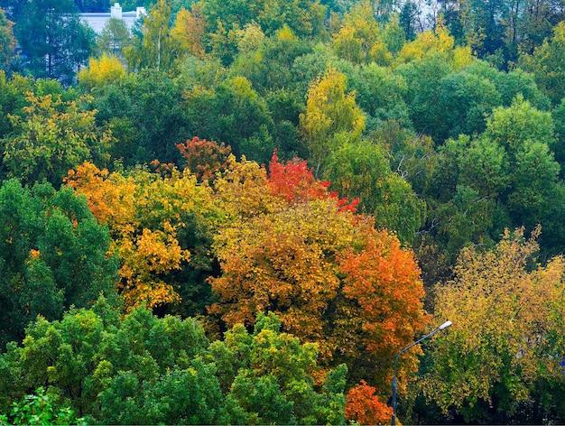 Arbres d'automne dynamique feuillage nature background
