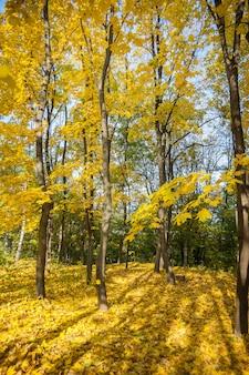 Arbres d'automne, feuilles jaunes sur les arbres, paysage d'automne, parc d'automne, automne doré