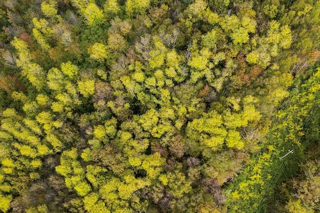 Arbres d'automne avec des feuilles jaunes et rouges vue d'une hauteur de 30 mètres