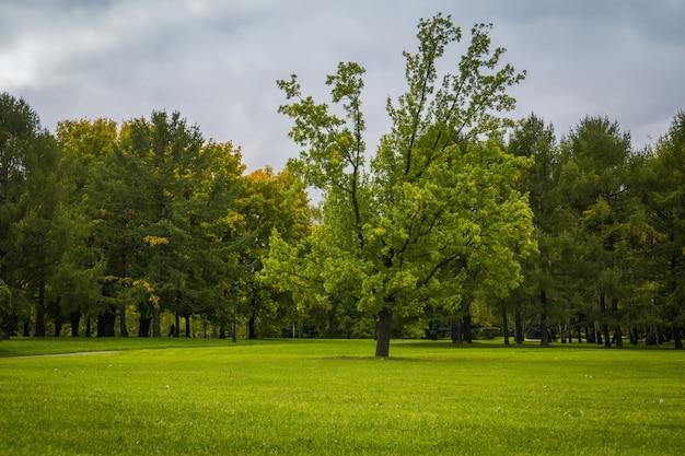 Arbres en automne parc de la ville