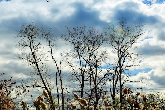 Arbres d'automne sans feuilles, branches d'arbres nues le chêne contre le ciel