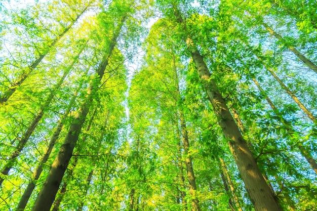 Arbres aux feuilles vertes