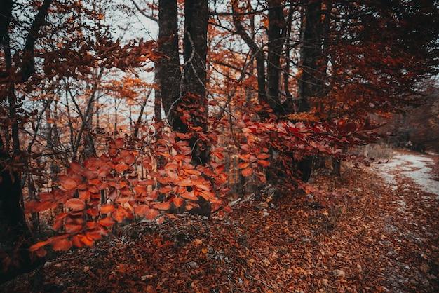 Arbres de branche d'automne dans les fores