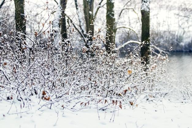 Arbres et buissons enneigés au bord de la rivière