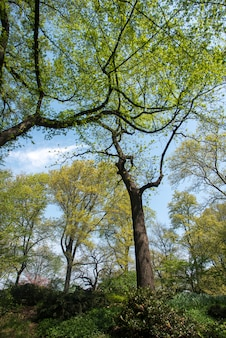 Arbres à central park, manhattan, état de new york, états-unis