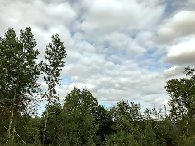 Arbres et ciel bleu avec des nuages blancs texturés