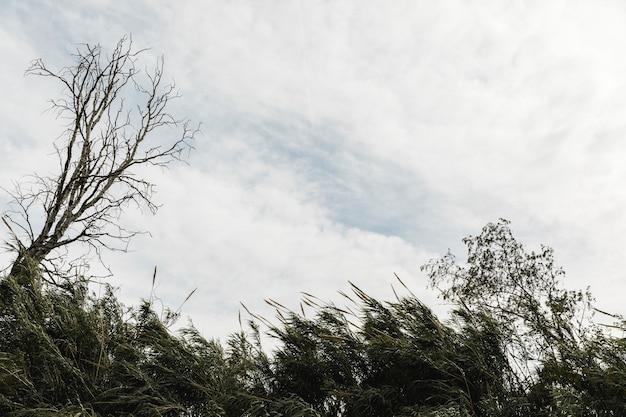 Arbres sur un ciel nuageux