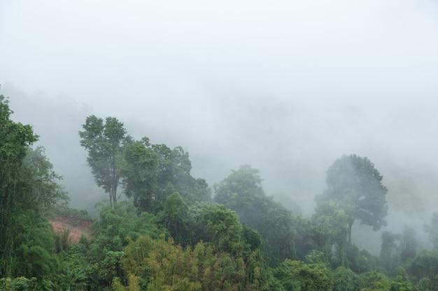 Arbres couverts de brouillard