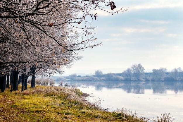 Arbres couverts de givre sur la rive de la rivière
