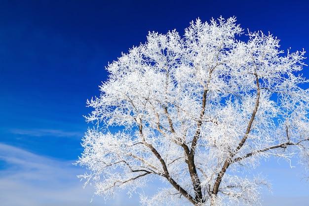 Arbres couverts de neige contre le ciel