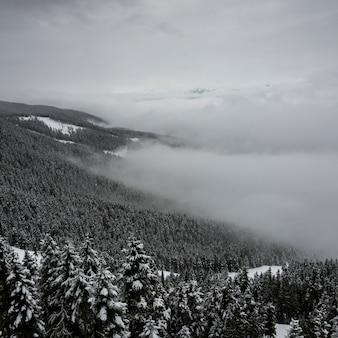Arbres couverts de neige sur la montagne, whistler, colombie-britannique, canada