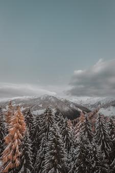 Arbres couverts de neige