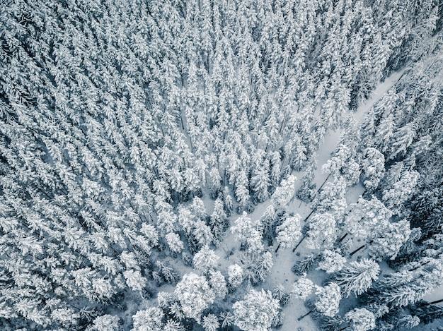 Arbres de couverture de neige fraîche - drone aérien photo de haut en bas