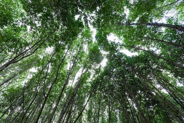 Arbres de croissance forestière. forêt de mangrove nature verte