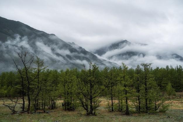 Arbres dans le brouillard du matin sur les épinettes de montagne