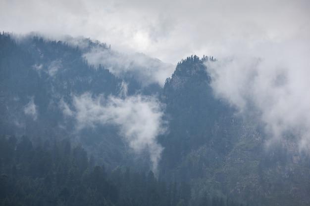 Des arbres dans le brouillard