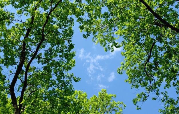 Arbres dans la forêt et ciel bleu