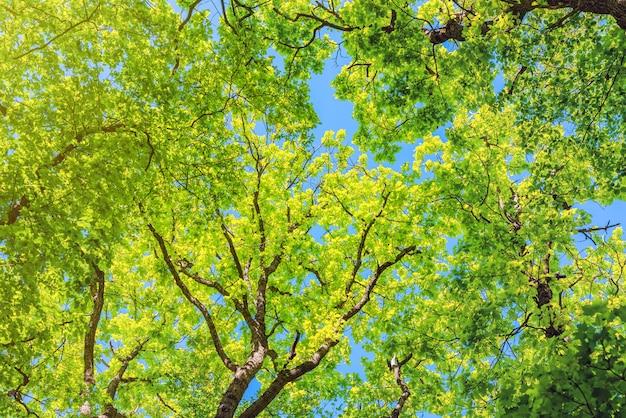 Arbres dans la forêt verte