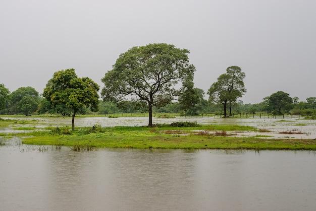 Arbres dans une zone humide pendant la saison des pluies dans le pantanal du mato grosso pocone mato grosso brésil